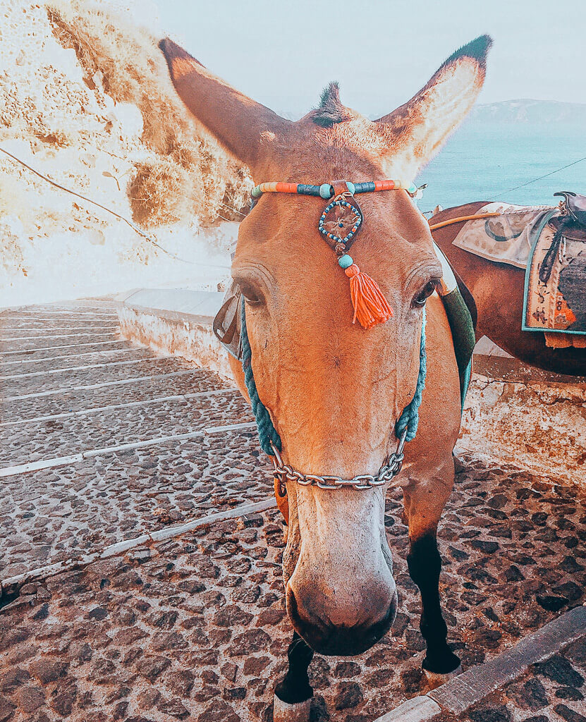 Solo Female Travel - Experiences in Santorini Greece Donkey Standing on the Steps of Fira