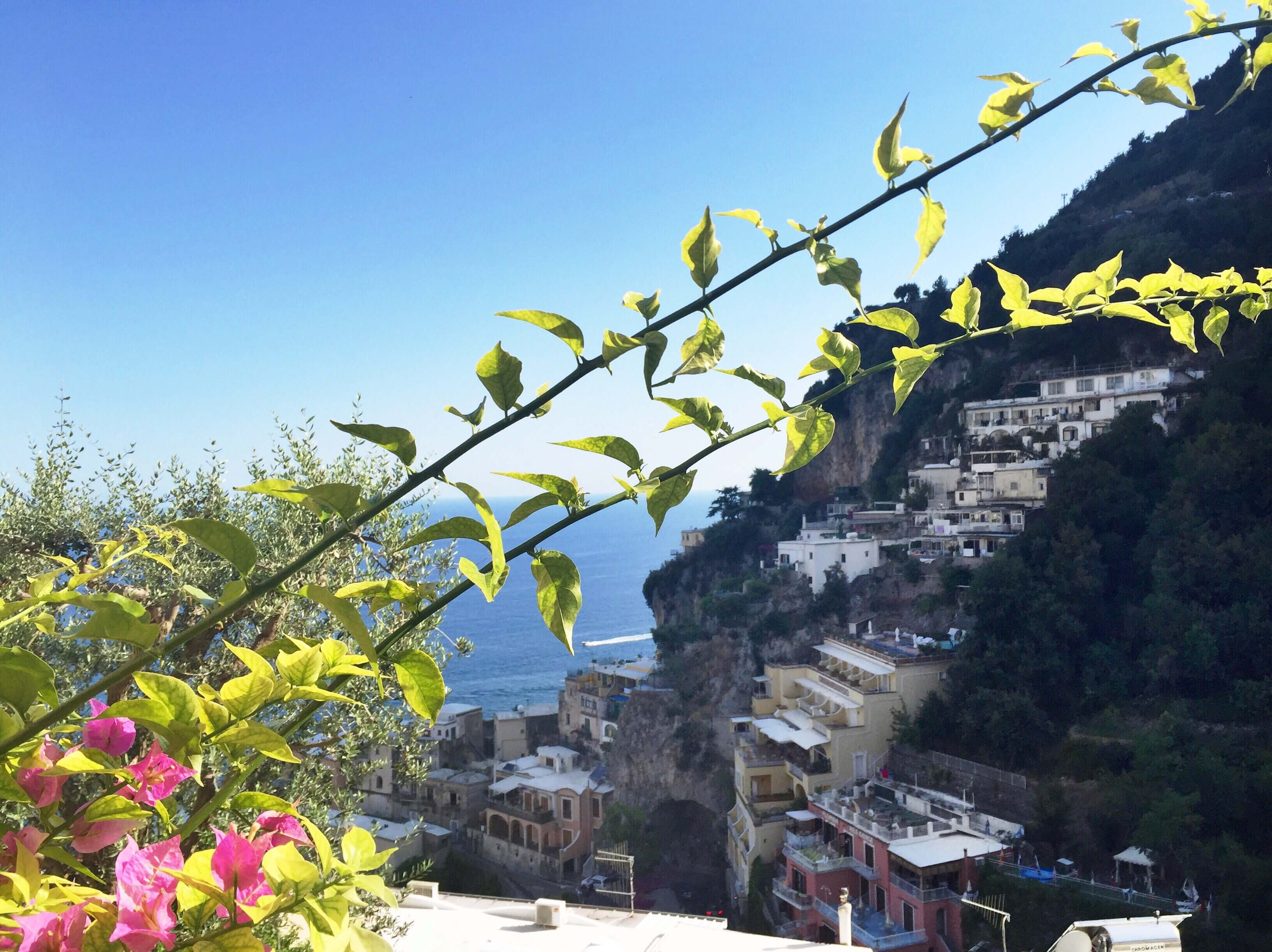 Lovely flowers against the hilly landscape of Positano