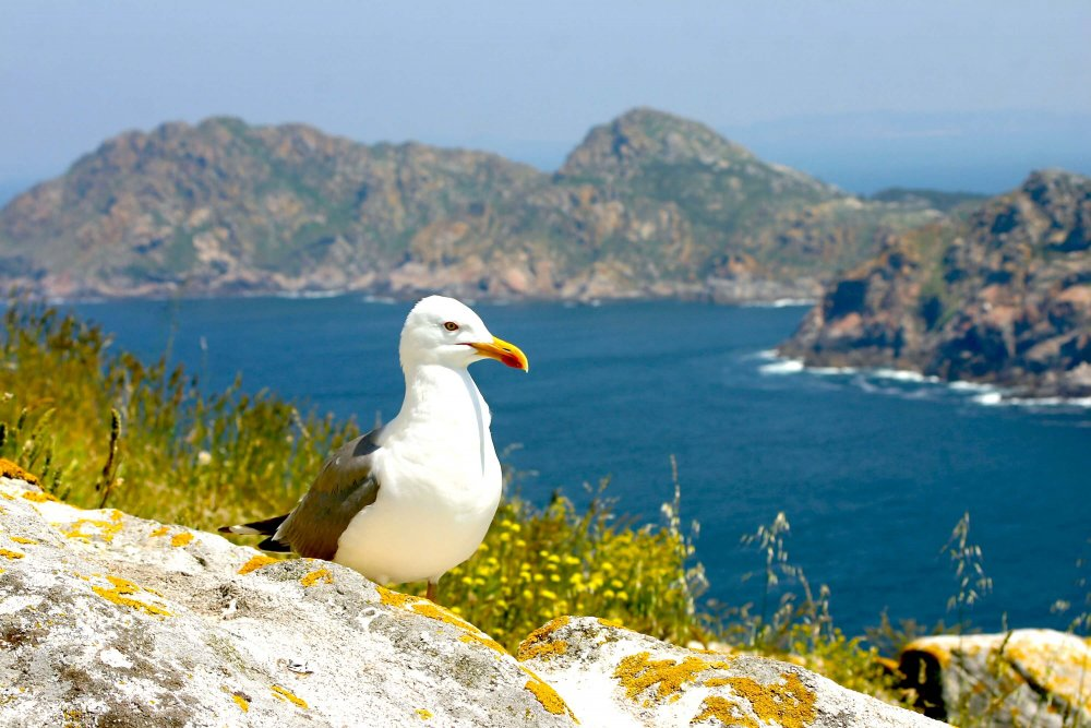 20 photos that will inspire you to visit the Cies Islands - Galicia Travel Spain Seagull Perched on a Rock