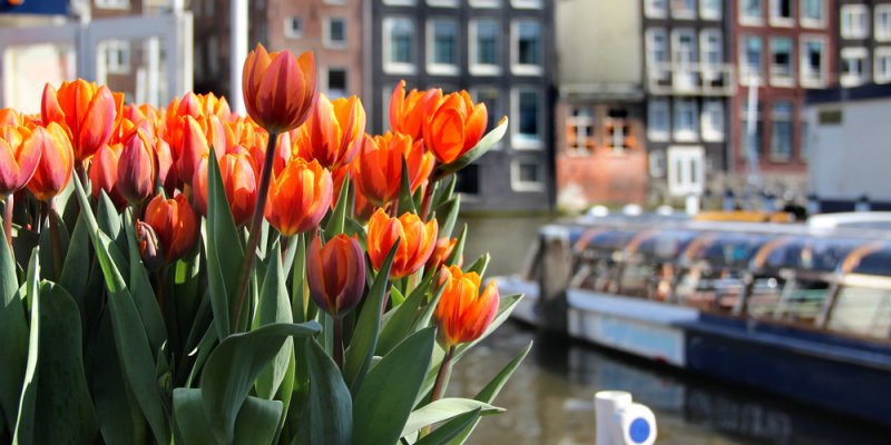 Weekend in Amsterdam guide - tulips